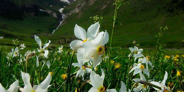 flora-andorra
